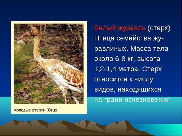 Белый журавль (стерх) Птица семейства жу- равлиных. Масса тела около 6-8 кг,...