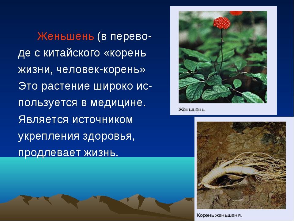 Женьшень (в перево- де с китайского «корень жизни, человек-корень» Это расте...