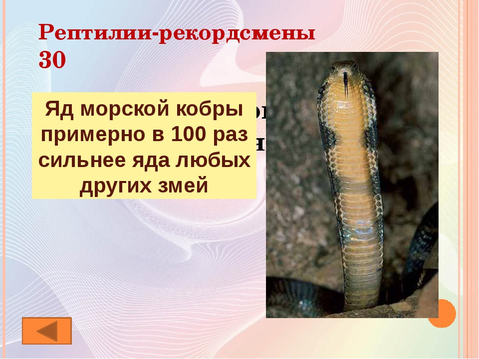 Ребусы о животных 40 Крокодил
