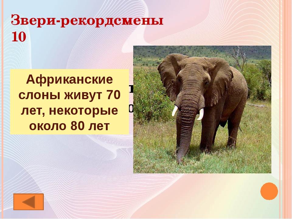 Ребусы о млекопитающих 10 Медведь