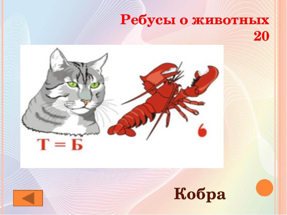 чего ребусы про животных в картинках с ответами которые