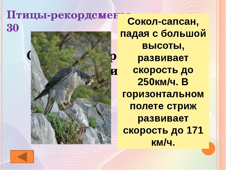Ребусы о животных 20 Кобра