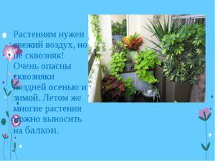 Растениям нужен свежий воздух, но не сквозняк! Очень опасны сквозняки поздней