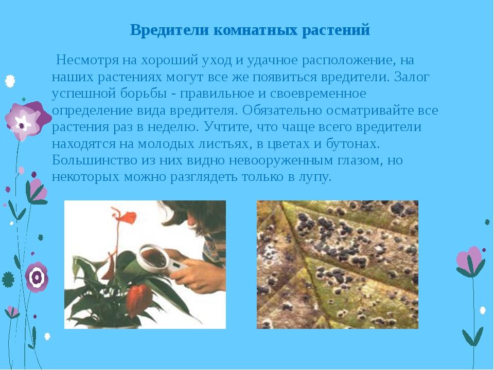 Вредители комнатных растений Несмотря на хороший уход и удачное расположение,...