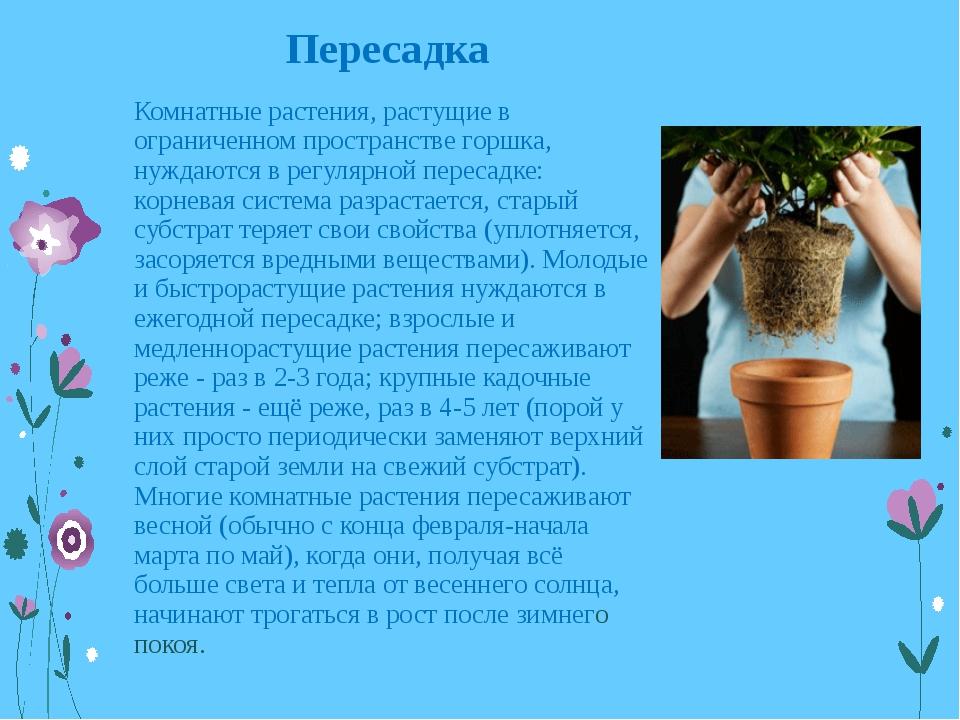 Пересадка Комнатные растения, растущие в ограниченном пространстве горшка, ну...
