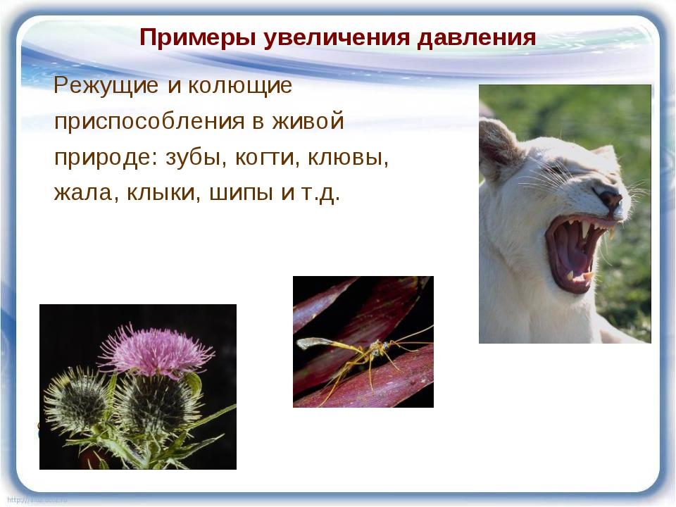 Примеры увеличения давления Режущие и колющие приспособления в живой природе:...
