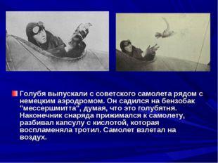 Голубя выпускали с советского самолета рядом с немецким аэродромом. Он садилс