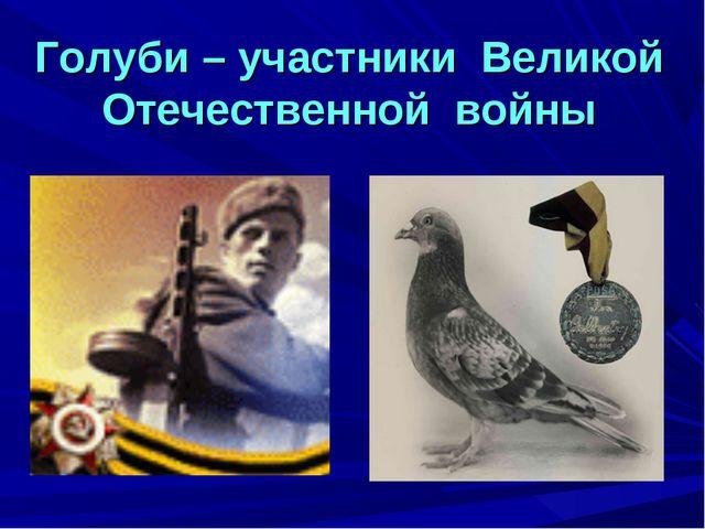 Голуби – участники Великой Отечественной войны