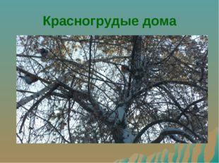 Красногрудые дома