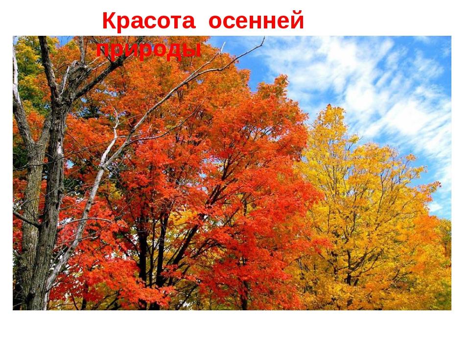 Красота осенней природы