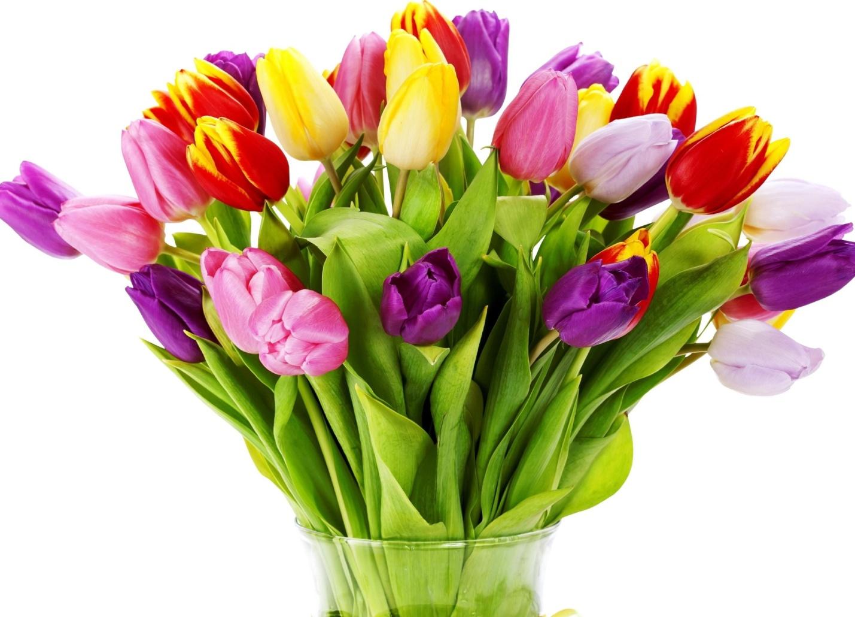 http://picsfab.com/download/image/33951/2048x1536_belila-flowers-svetlyie-buket-bouquet-tulips-belyij.jpg