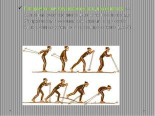 Попеременный двухшажный ход применяется на равнинных участках дистанции и отл