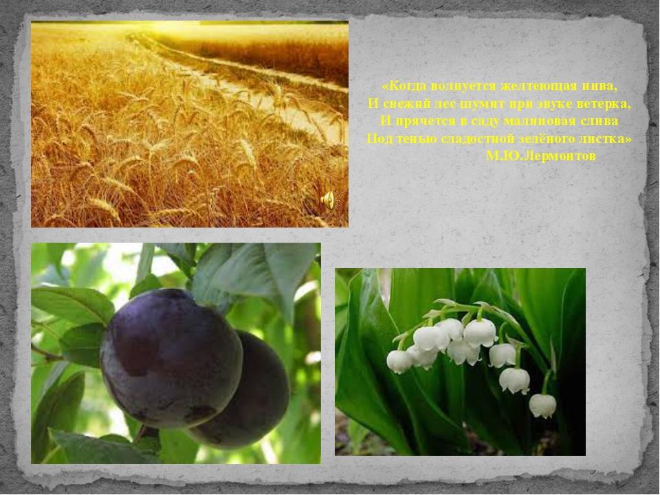 «Когда волнуется желтеющая нива, И свежий лес шумит при звуке ветерка, И пряч...