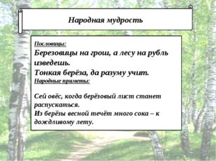 Народная мудрость Пословицы: Березовицы на грош, а лесу на рубль изведешь. Т