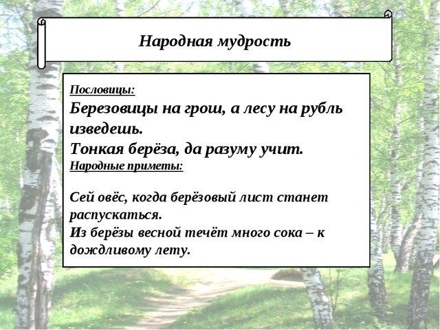 Народная мудрость Пословицы: Березовицы на грош, а лесу на рубль изведешь. Т...