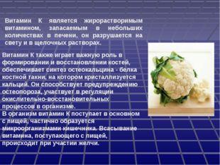 Витамин К является жирорастворимым витамином, запасаемым в небольших количест