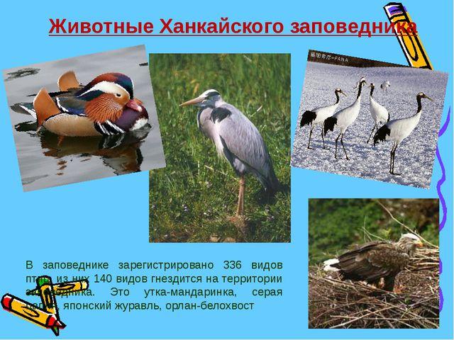 Животные Ханкайского заповедника В заповеднике зарегистрировано 336 видов пти...