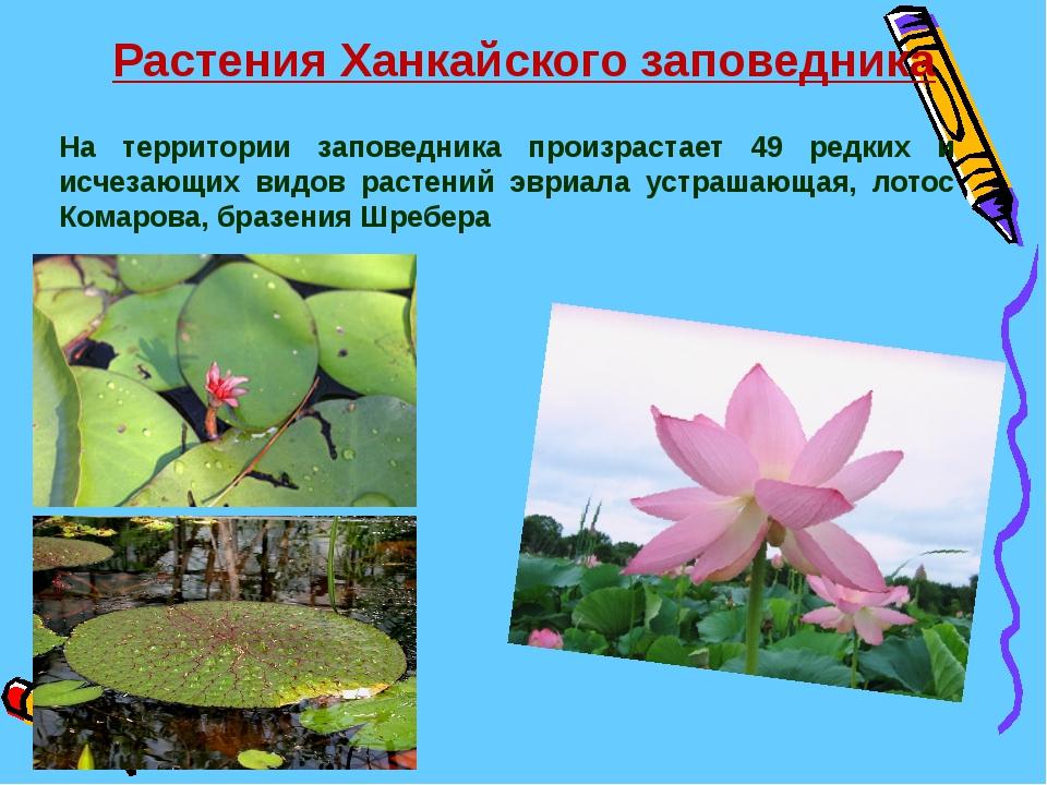 Растения Ханкайского заповедника На территории заповедника произрастает 49 ре...