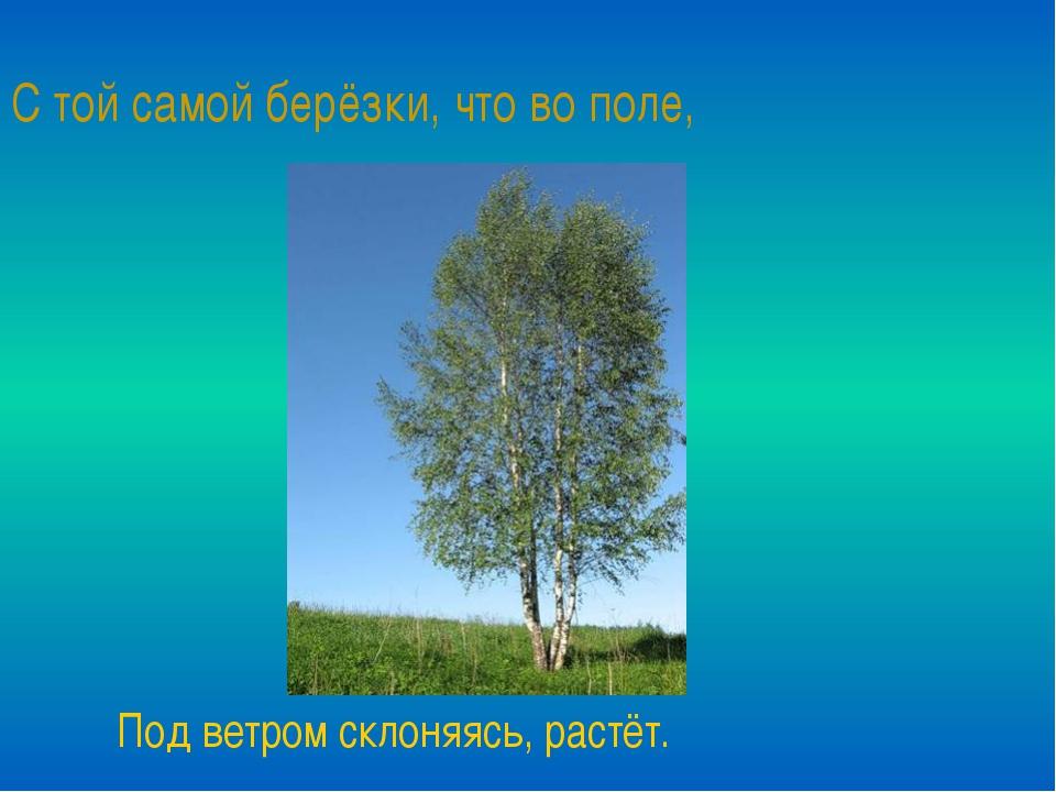 С той самой берёзки, что во поле, Под ветром склоняясь, растёт.