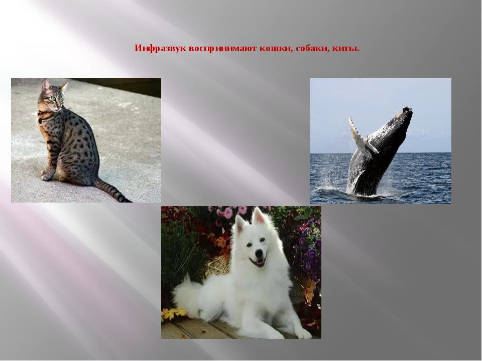 Инфразвук воспринимают кошки, собаки, киты.