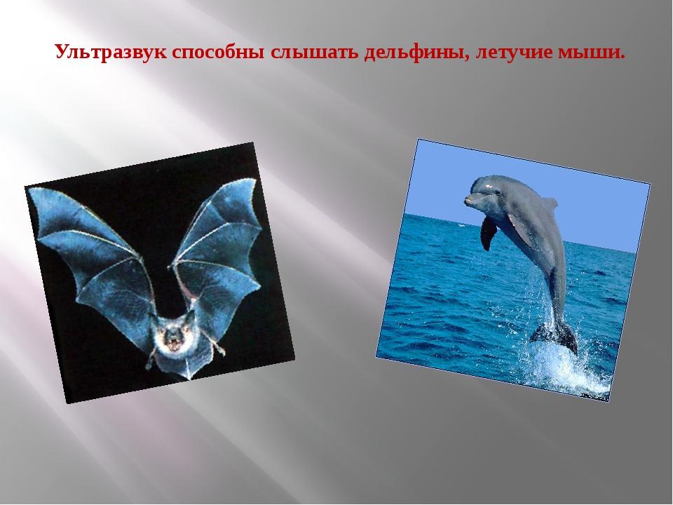 Ультразвук способны слышать дельфины, летучие мыши.