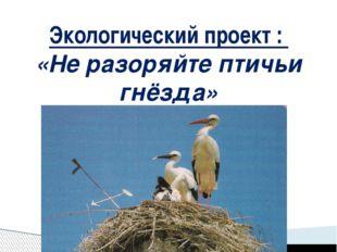 Экологический проект : «Не разоряйте птичьи гнёзда»