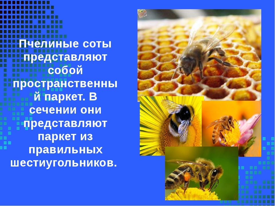 Пчелиные соты представляют собой пространственный паркет. В сечении они предс...