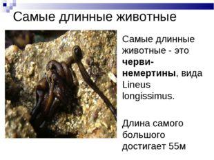 Самые длинные животные Самые длинные животные - это черви-немертины, вида Lin