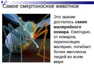 Самое смертоносное животное Это звание досталось самке малярийного комара. Еж