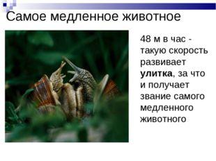 Самое медленное животное 48 м в час - такую скорость развивает улитка, за чт