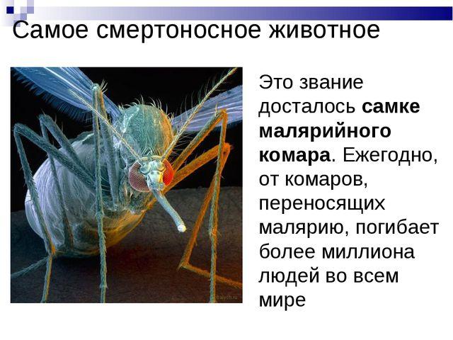 Самое смертоносное животное Это звание досталось самке малярийного комара. Еж...