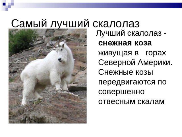 Самый лучший скалолаз Лучший скалолаз - снежная коза живущая в горах Северной...