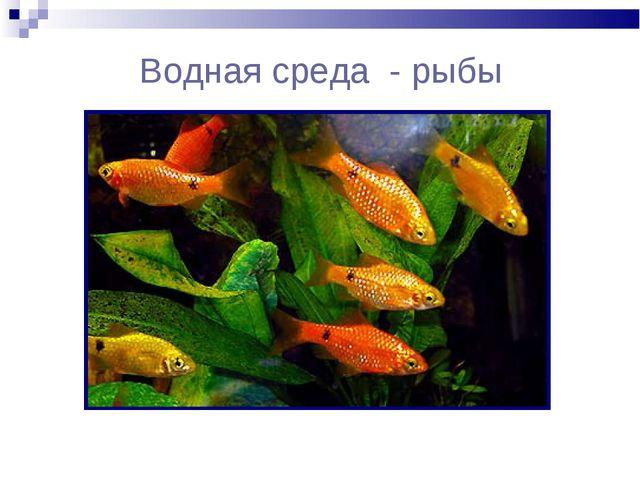 Водная среда - рыбы