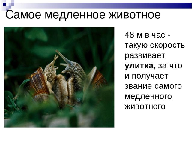 Самое медленное животное 48 м в час - такую скорость развивает улитка, за чт...