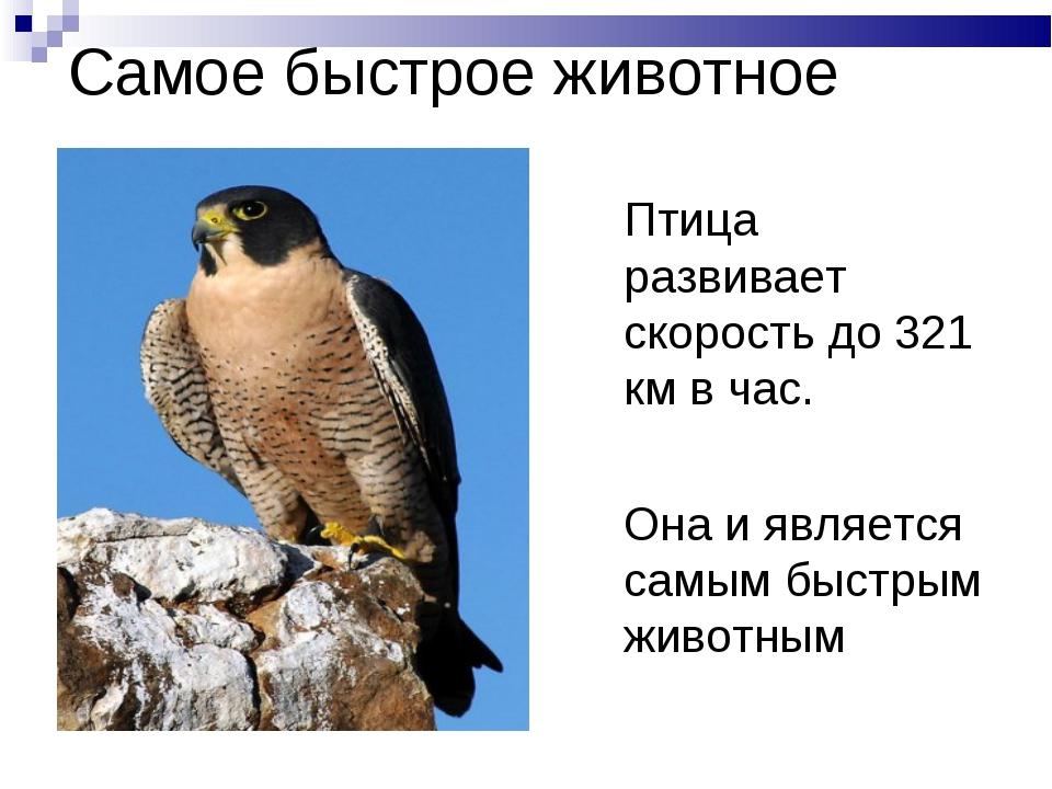 Самое быстрое животное Птица сапсан развивает скорость до 321 км в час. Она и...