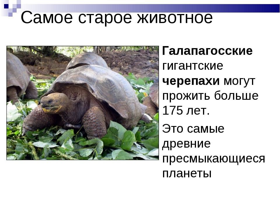 Самое старое животное Галапагосские гигантские черепахи могут прожить больше...
