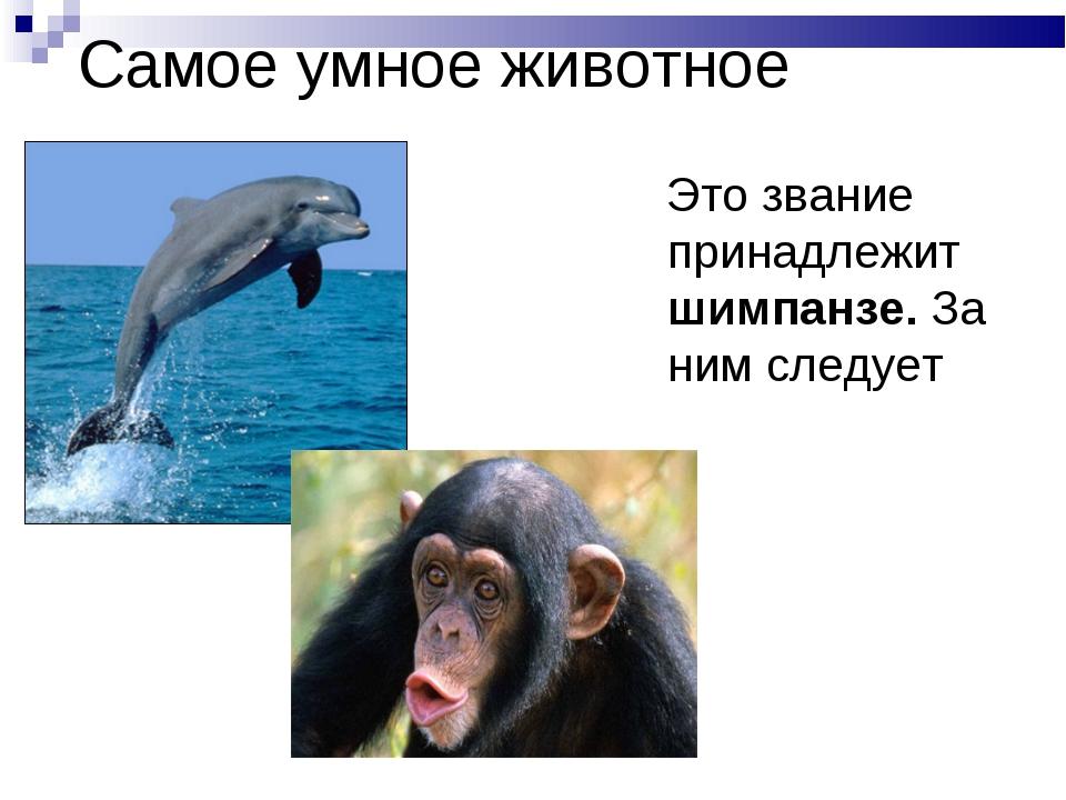 Самое умное животное Это звание принадлежит шимпанзе. За ним следует дельфин