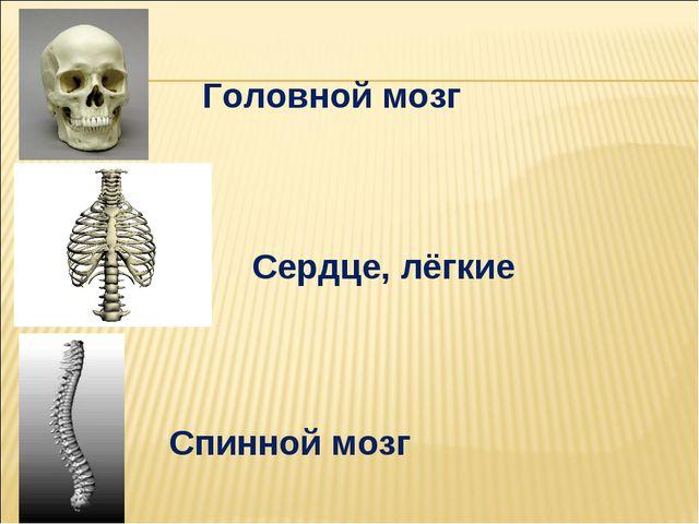 Головной мозг Спинной мозг Сердце, лёгкие