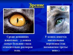 Зрение Среди домашних животных у кошки самые большие глаза относительно разме