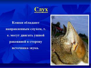 Слух Кошки обладают направленным слухом, т. е. могут двигать ушной раковиной