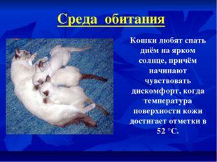 Среда обитания Кошки любят спать днём на ярком солнце, причём начинают чувств