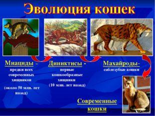 Миациды – предки всех современных хищников (около 50 млн. лет назад) Диниктис