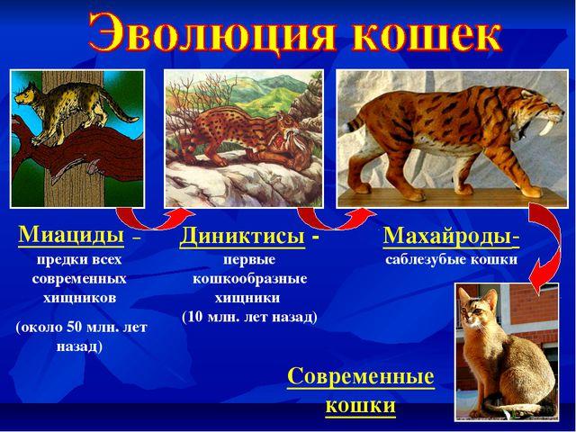 Миациды – предки всех современных хищников (около 50 млн. лет назад) Диниктис...