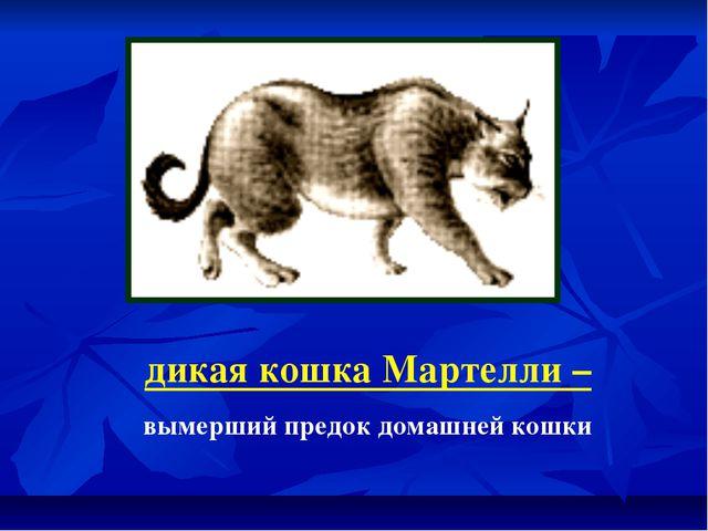 дикая кошка Мартелли – вымерший предок домашней кошки