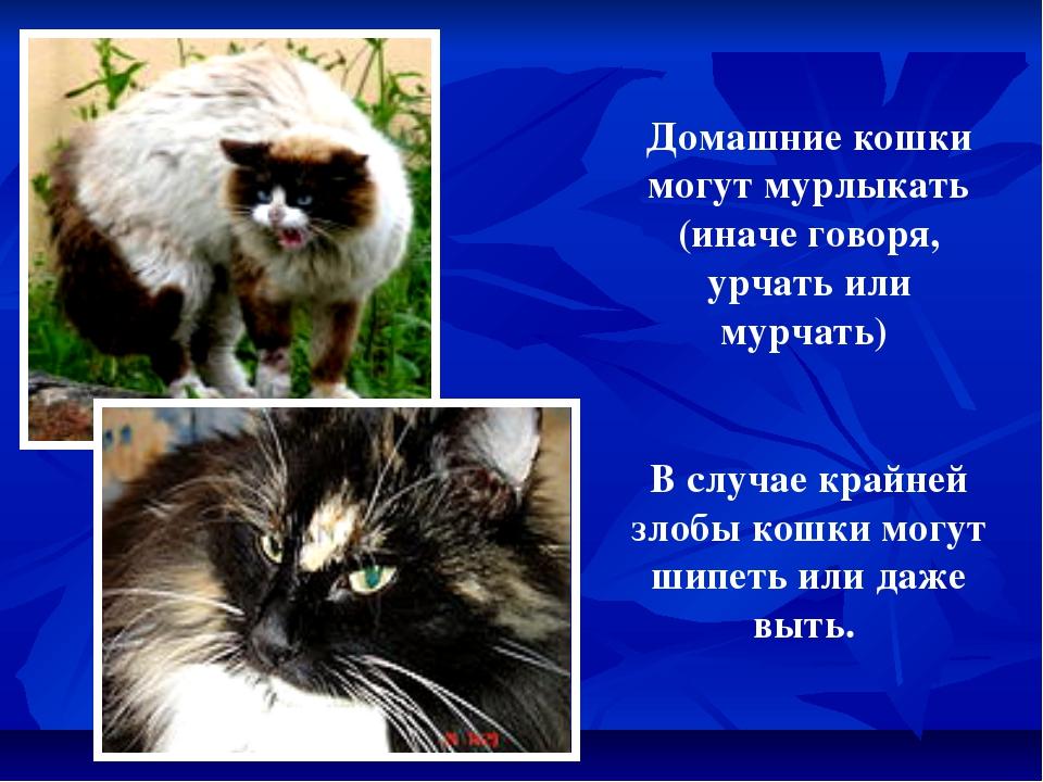 Домашние кошки могут мурлыкать (иначе говоря, урчать или мурчать) В случае кр...