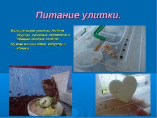 Питание улитки. Больше всего улит ки любят огурцы, сушеных червячков и нежные