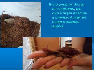 Если улиток долго не кормить, то они могут впасть в спячку. А так же спят в з