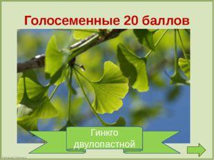 Водоросли 10 баллов Зеленая порода Хранит запасы йода. Хоть капустой и прозва