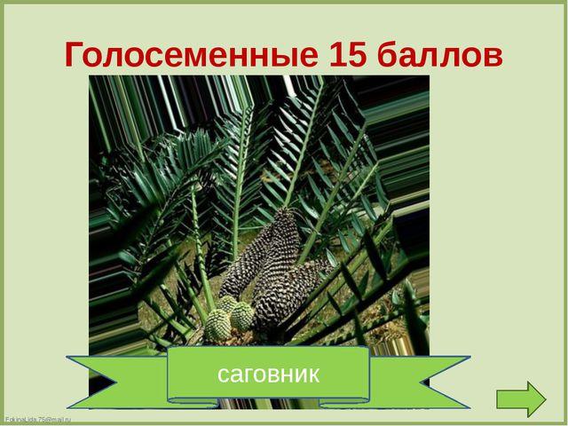 Папоротники 10 баллов вайи FokinaLida.75@mail.ru