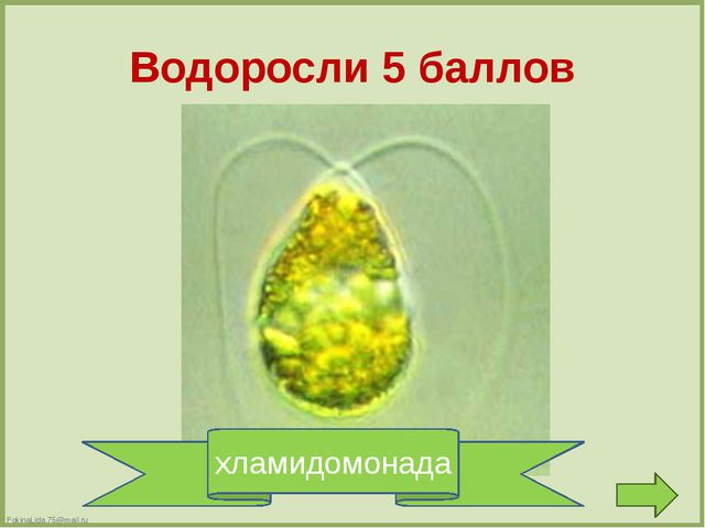 Водоросли 15 баллов улотрикс FokinaLida.75@mail.ru